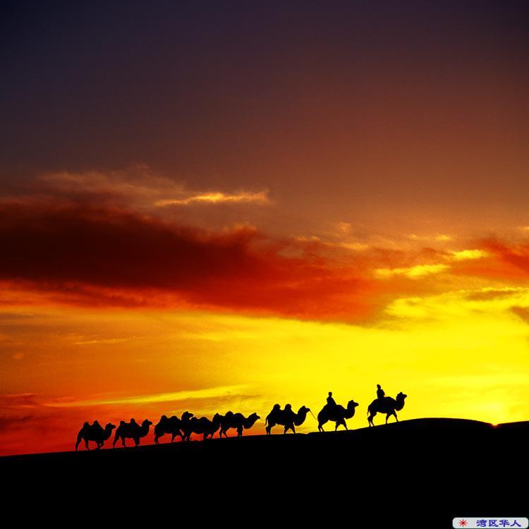 小提琴曲 天边的骆驼
